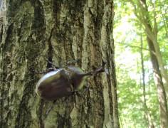 【終了】とって しらべて たべて 毎日が楽しくなる昆虫キャンプ(2泊)