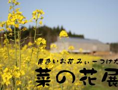 (終了)菜の花展