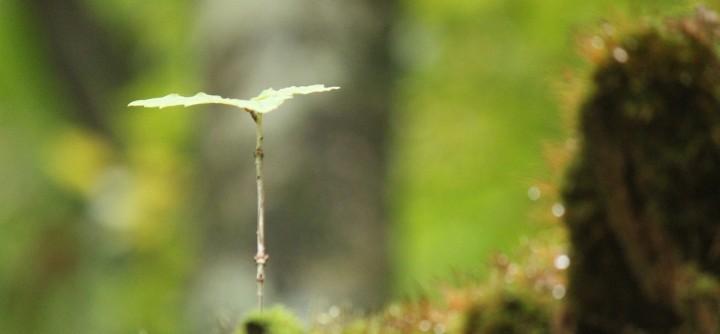 【締切ました】里山リトリート ~自然と人と自分と対話する・森でののんびり時間~