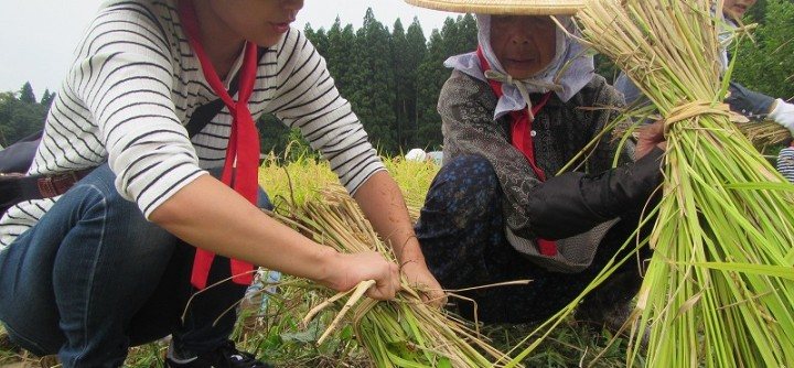 【終了】カマを持って稲刈りをしよう