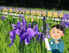 【終了】カキツバタ俳句大会 募集中!(5月末まで)